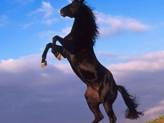 Será que você conhece todas as raças de cavalo?