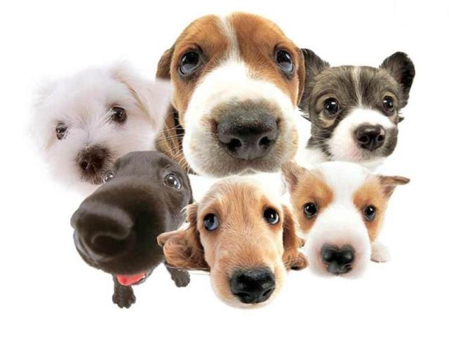 🐶❓Acerte as raças de cachorro ❓🐶