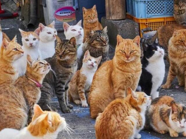 Qual raça de gato você seria?