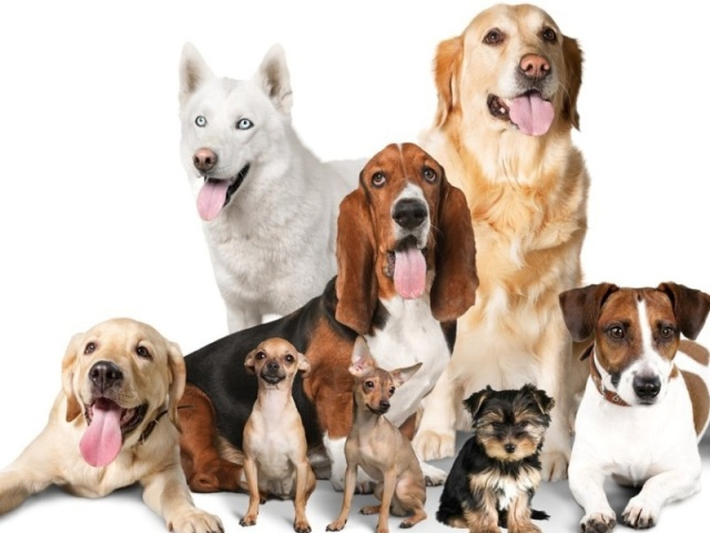 🐶 Acerte as raças de cachorros parte 2 🐶