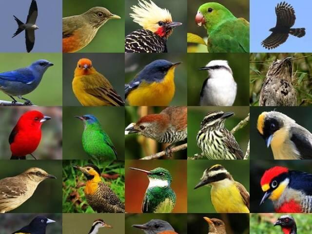 Qual ave combina com sua personalidade?