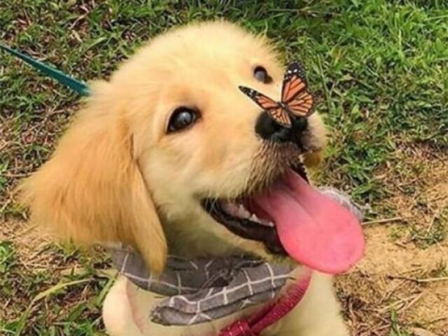 Qual raça de cachorro é essa?