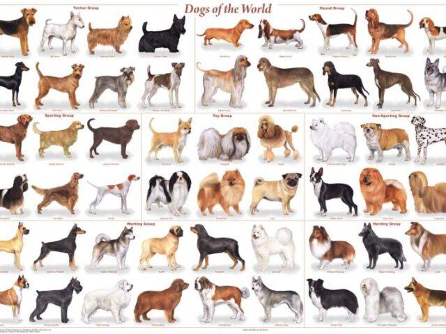 Qual é o nome do cachorro?