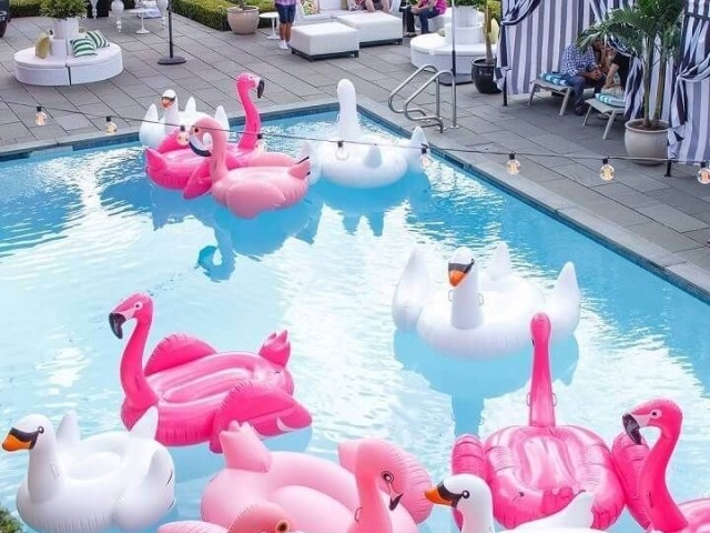 Crie sua festa na piscina!🦩🍧🍦