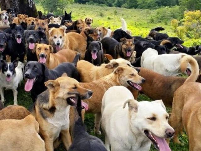 Quiz: Você conhece essas raças de cães?