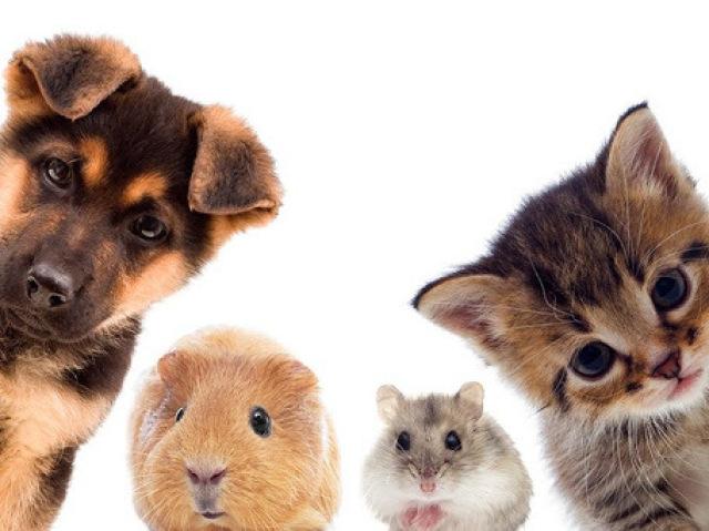 Qual animal de estimação combina mais com você?