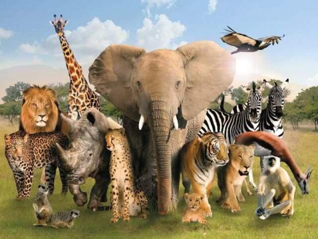 Que espécie de animal existe dentro de você?