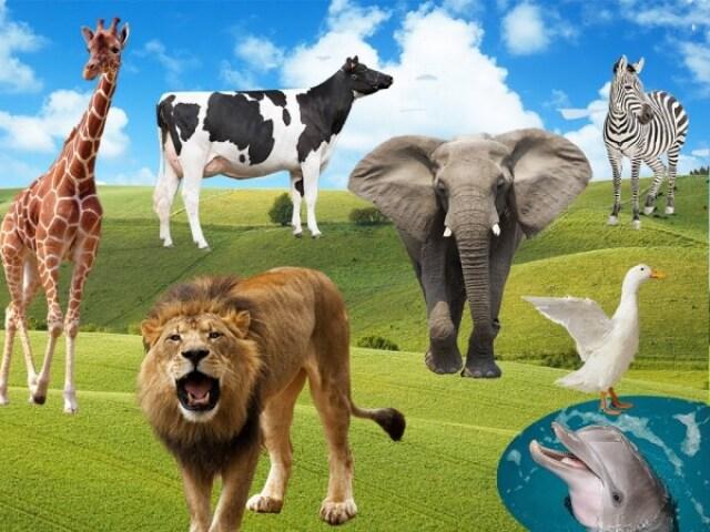 Curiosidades sobre animais!