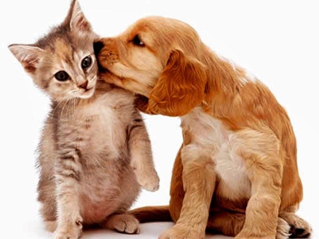Você é mais gato ou cachorro?