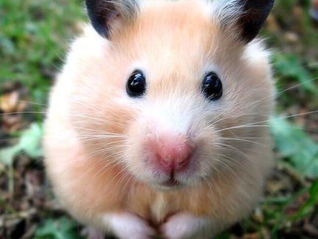 Monte sua vida com seu Hamster e Que tipo de dono vc e (Versão Hamster)