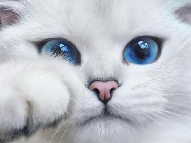 Quiz de personalidade: Qual gato combina com você?