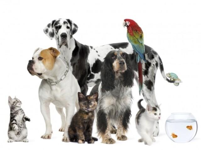 Qual animal você seria? (parte 4)