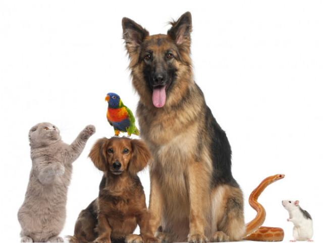 Qual animal você seria?(parte 3)