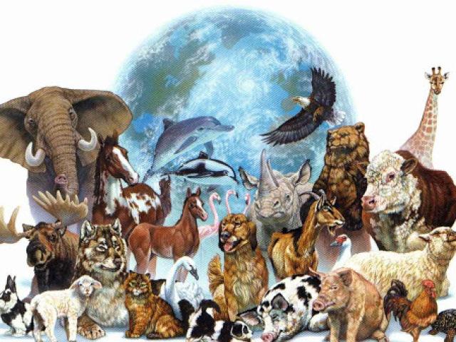 Que animal você seria? 😻