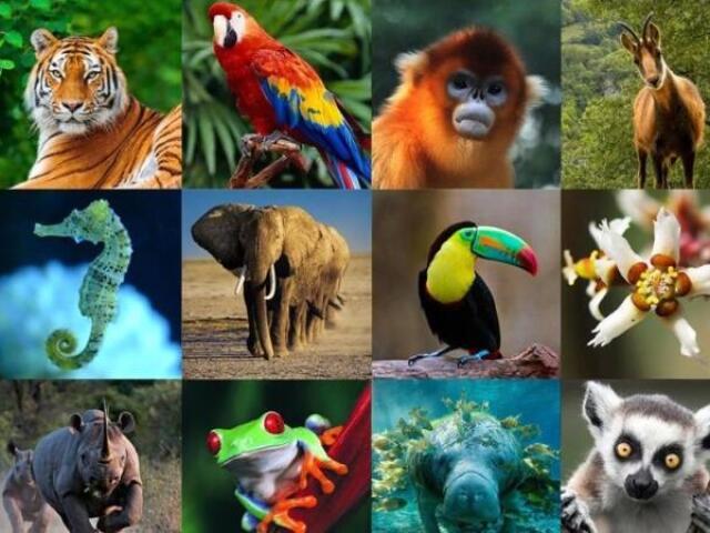Que animal você seria de acordo com sua personalidade?