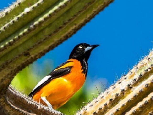 Você conhece as aves da Caatinga?