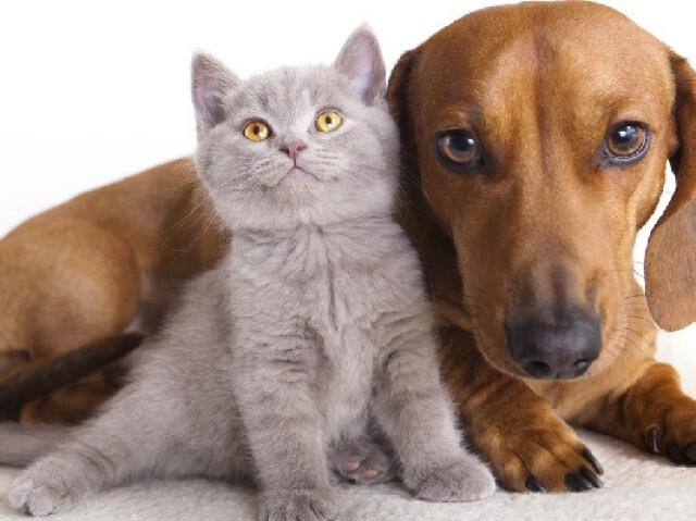 Você é cachorro ou gato?