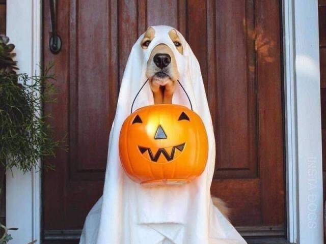 Responda essas perguntas que te indicarei um filme de Halloween