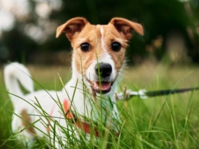 Você consegue adivinhar as raças de cães?
