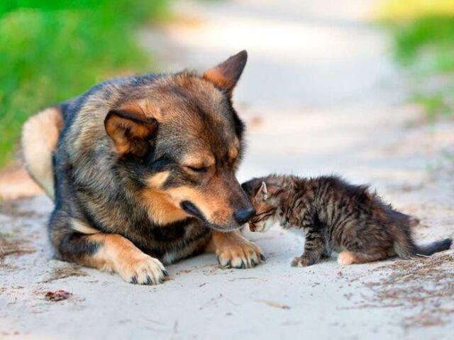 Clique e tente acertar as raças de cachorro