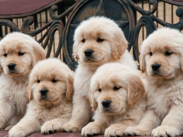 ⊱✿⊰Você conhece a raça de cachorro?