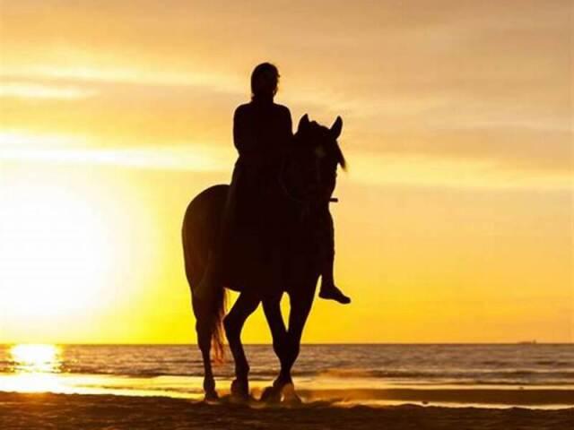 Será que você sabe identificar as raças de cavalos?