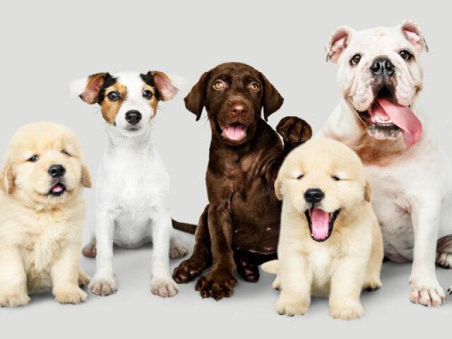 Quiz sobre cachorros