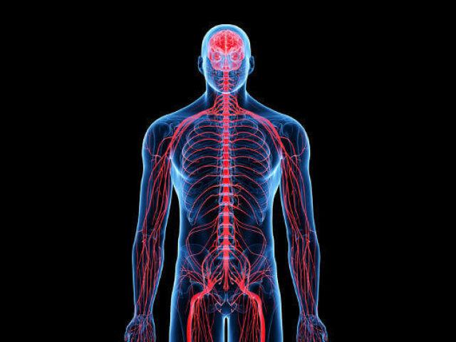 Biologia - Sistema nervoso