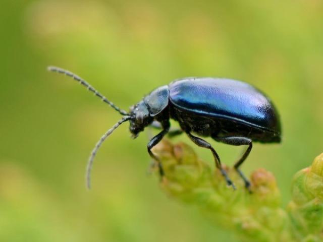 Qual inseto você seria?