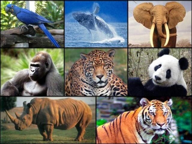 Qual o animal escondido?