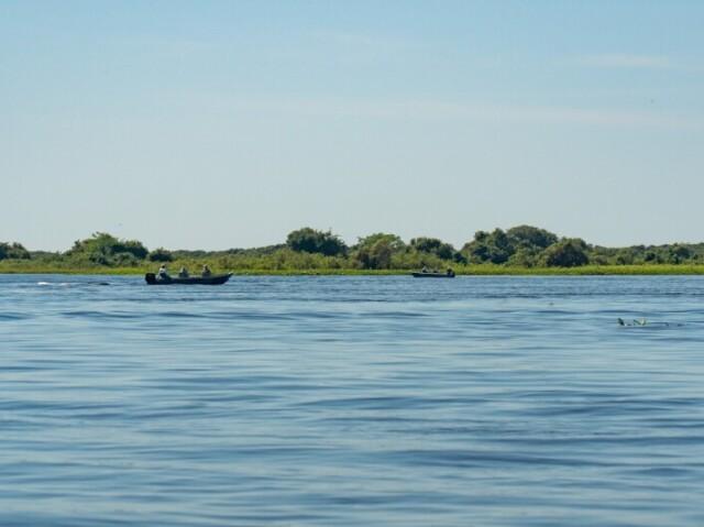Qual animal do Pantanal você seria?