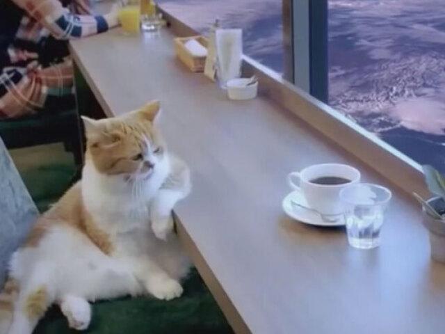 Monte seu cat coffe!❤