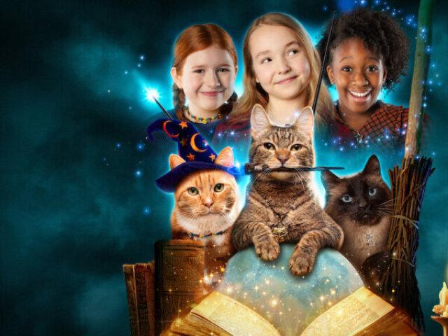 Quem você seria em Magia e Gatos