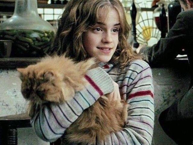 Você realmente conhece a Hermione Granger?