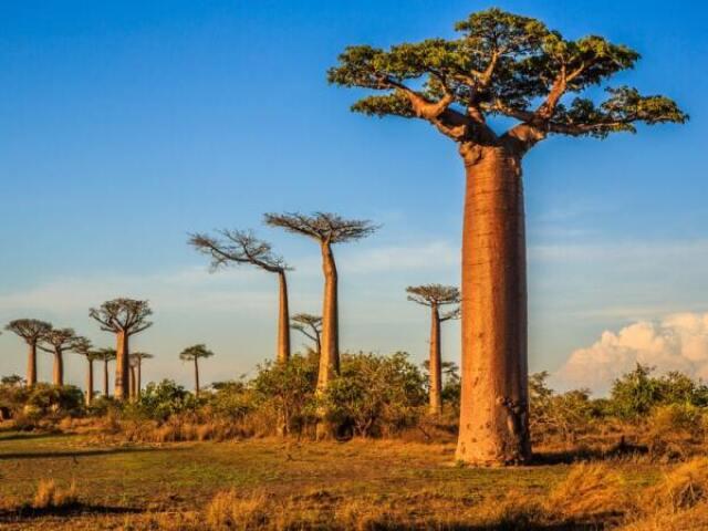 Qual animal da África você seria?